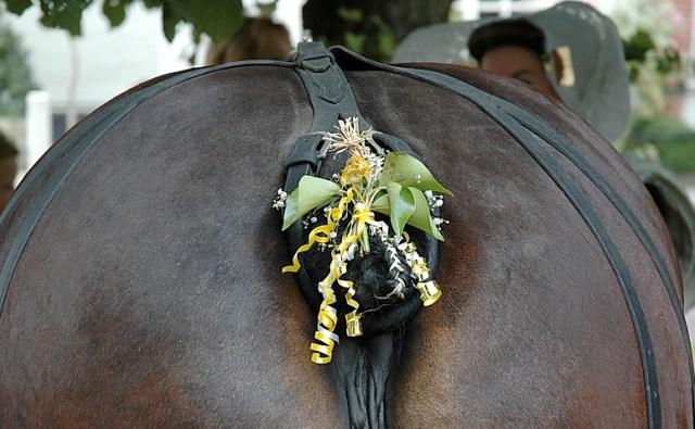 paardekont