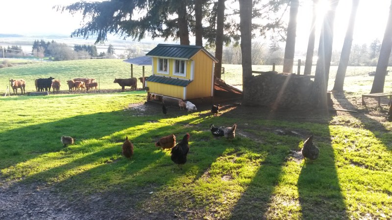 Evening Chicken coop with sun rays