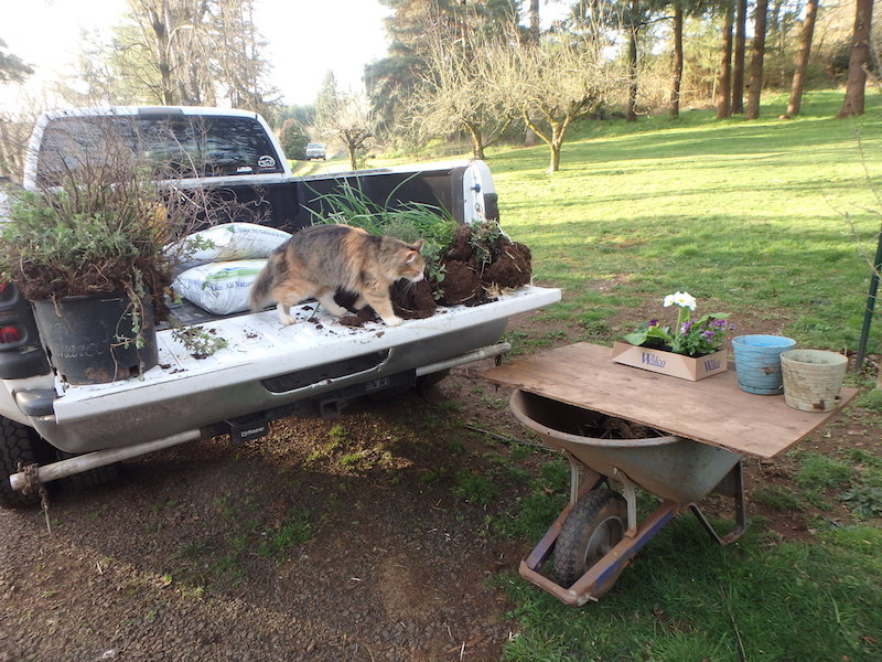 Tailgate potting bench for transplanting herbs