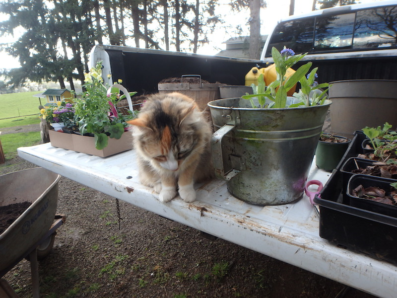 Cat gardening helper