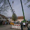 Der Maibaum wird hochgezogen