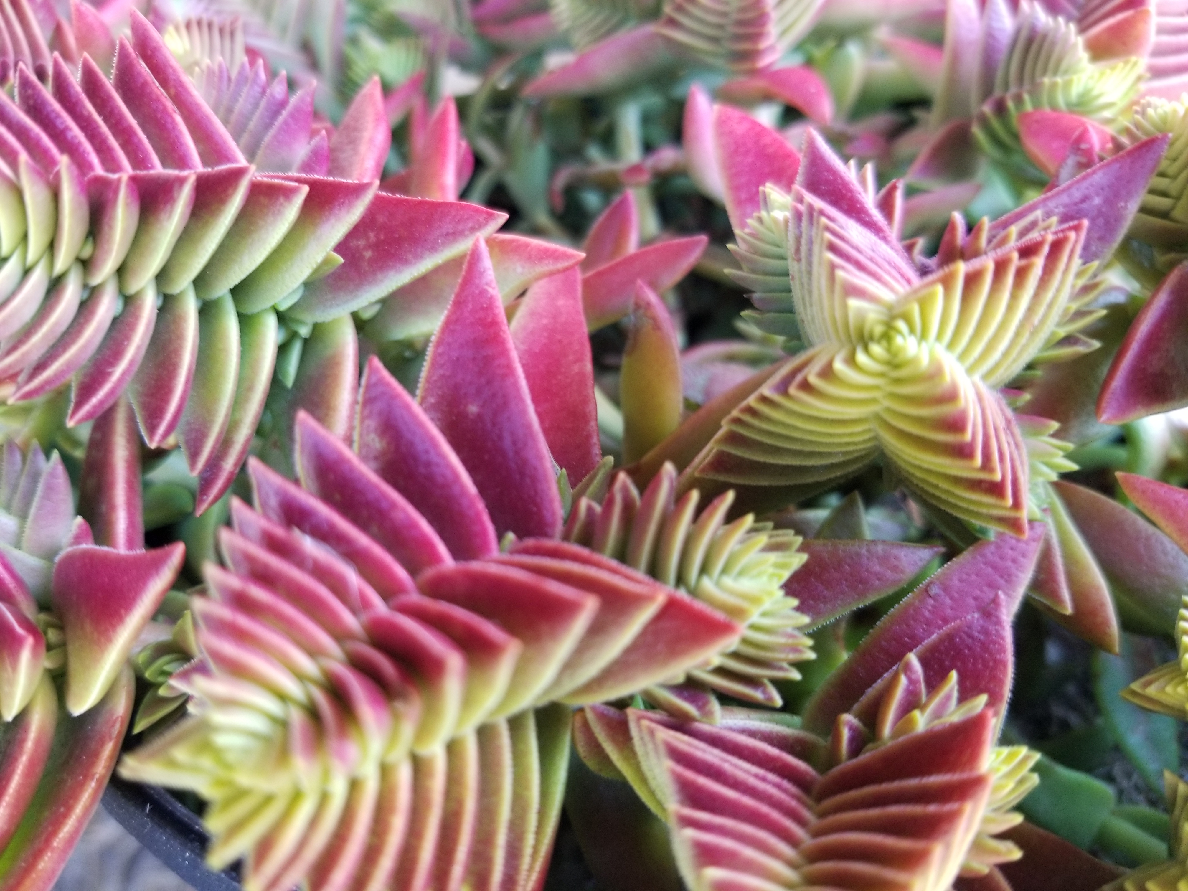 WIGPLANTS – Western Independent Greenhouses | Greehouse in