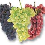 23-05-2015 : Onbekende druiven Italië