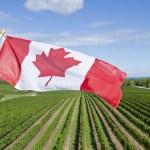 18-02-2006 : Wijnen uit Canada