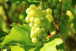 WijnbouwinZuid-Afrika