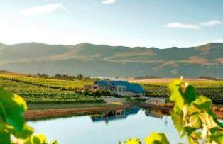 WijngaardenZuid-Afrika
