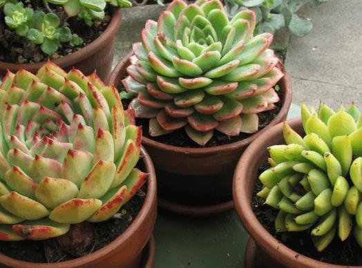Planten voor binnen  Botanisch wonen  Inspiratie  Wiki