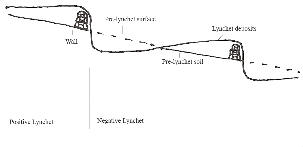 Transverse section through ancient lynchets, by Matt Law after Evans 1978, 121