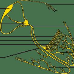 Sinoatrial Node Diagram Car Exterior Parts With Names Left Bundle Branch Block Pathophysiology Wikidoc