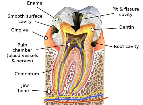 Tooth decay and dental health
