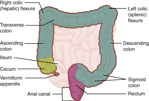 Image of colorectal region