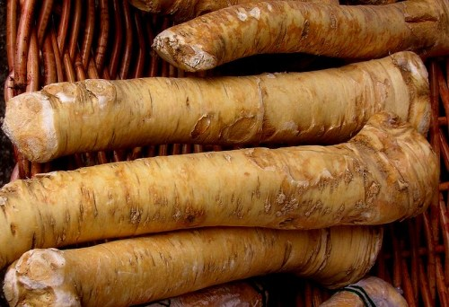 horseradish roots juice health benefits