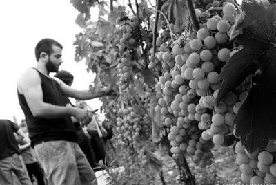 WIKI HOSTEL FAMILY pantasema farming harvest experience
