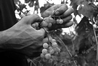 WIKI HOSTEL FAMILY pantasema farming harvest