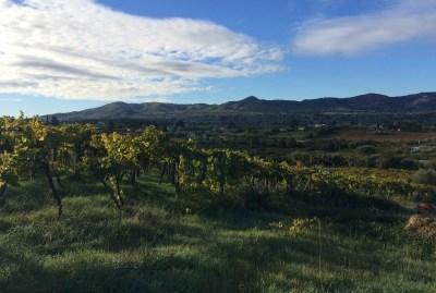 WIKI HOSTEL FAMILY pantasema farming vineyards panorama