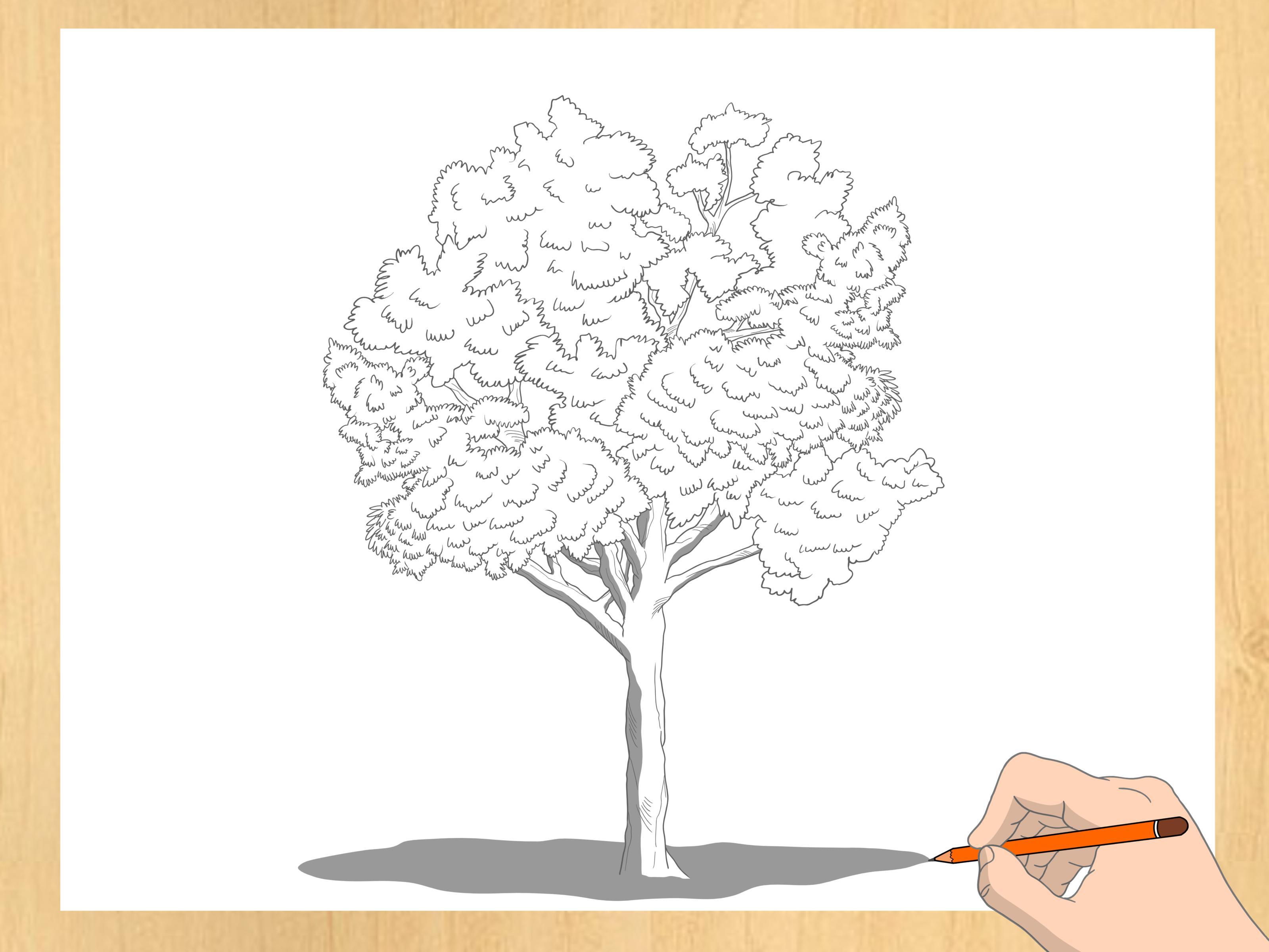 3 Modi per Disegnare gli Alberi  wikiHow