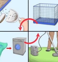 how to get rid of tropical rat mites on pet rats [ 3200 x 2400 Pixel ]