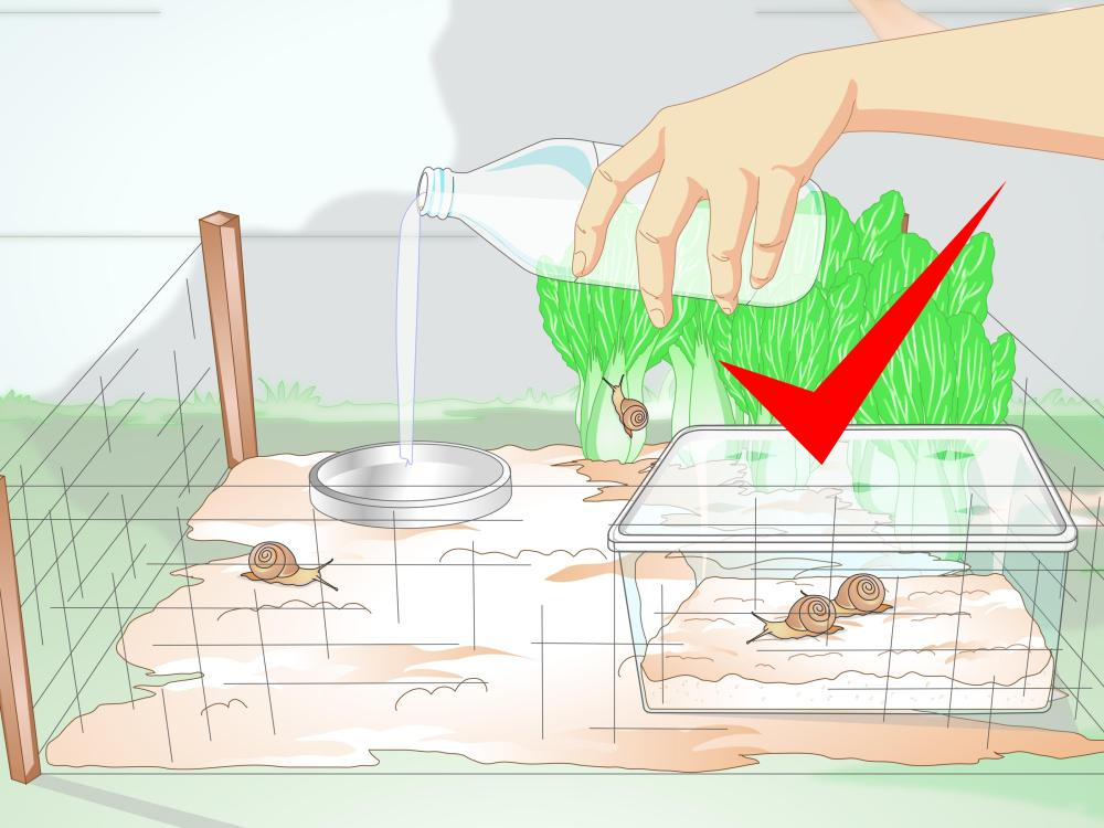 medium resolution of how to build a snail house