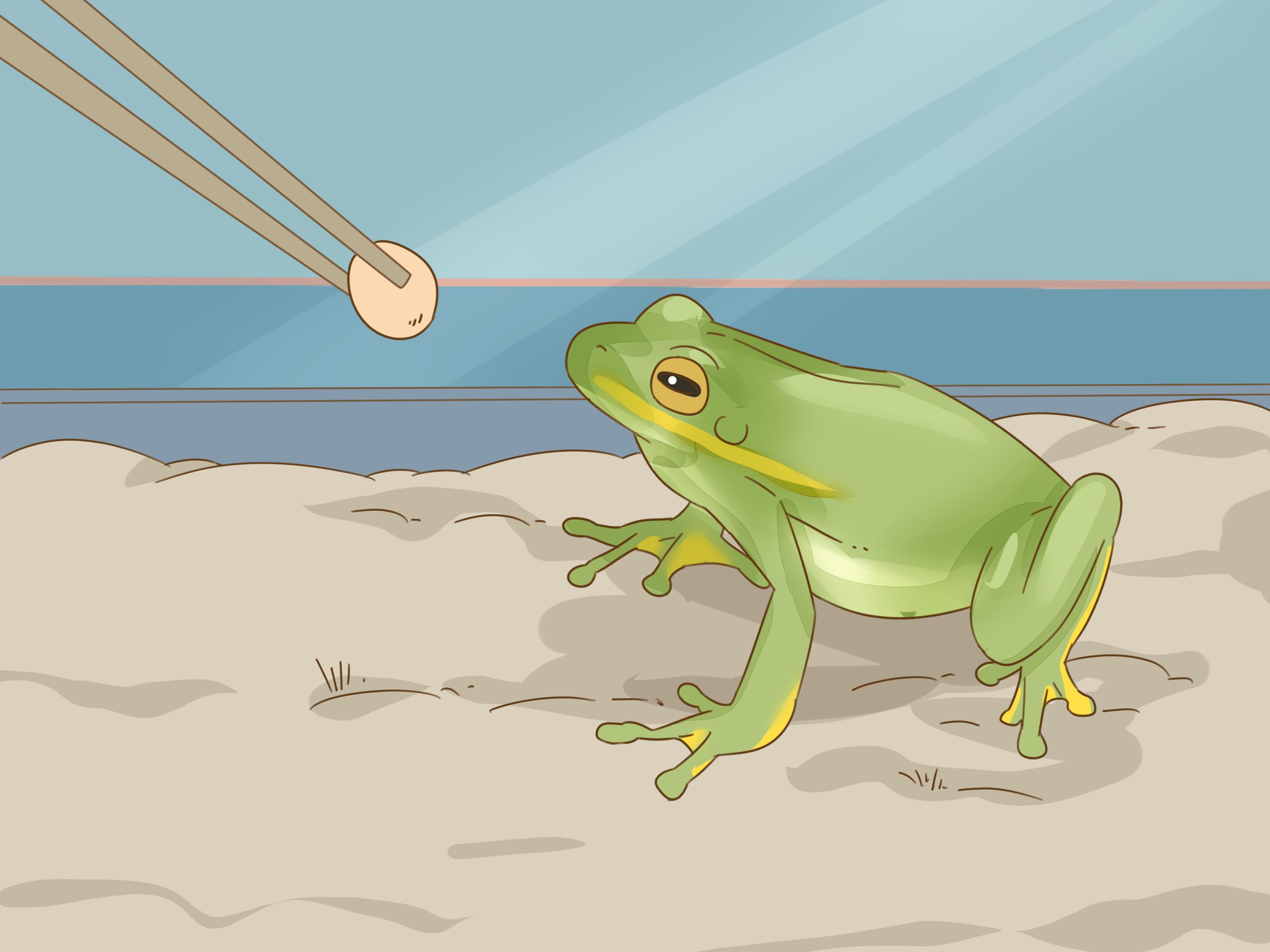 Frog Information In Hindi Frog Symbolism 01 30