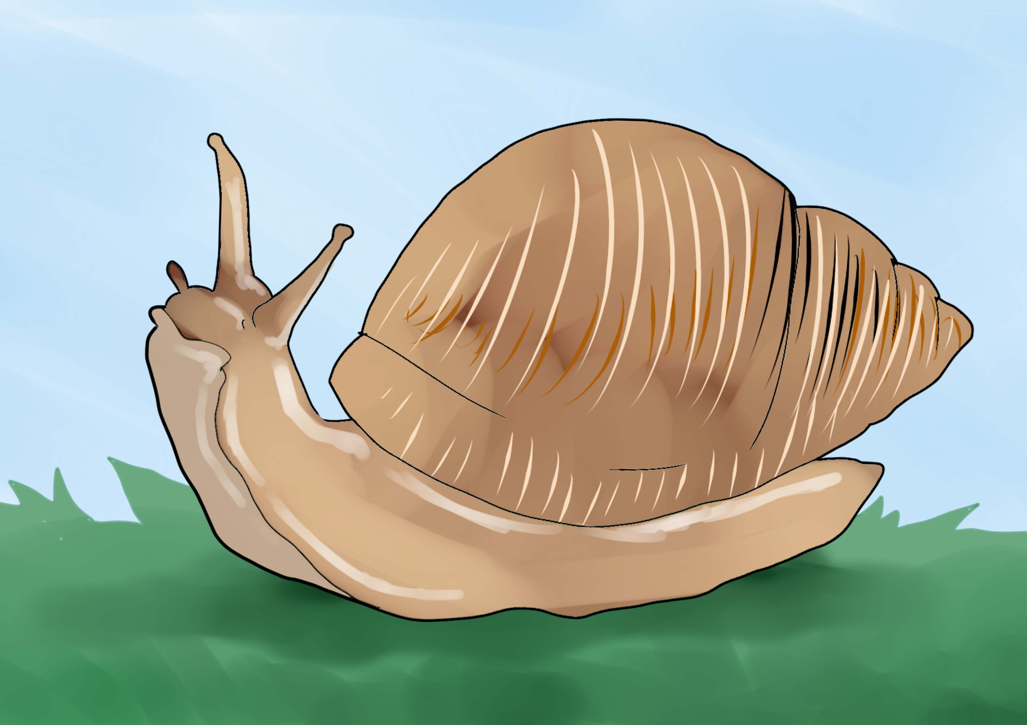 slug anatomy diagram bosch cooker hood wiring giant african land snail