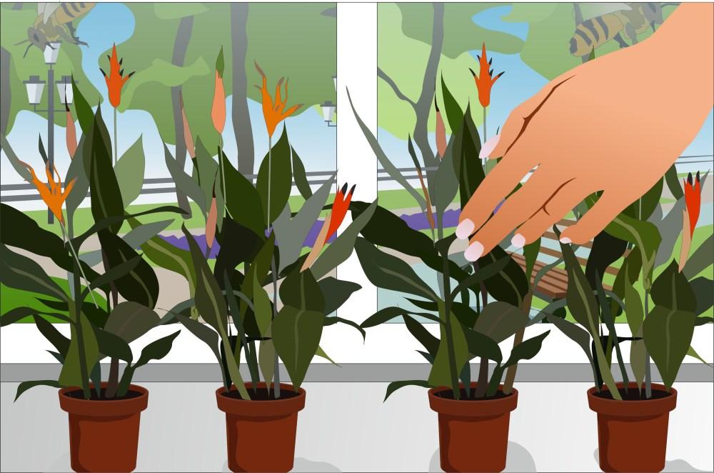 medium resolution of flower pollination diagram