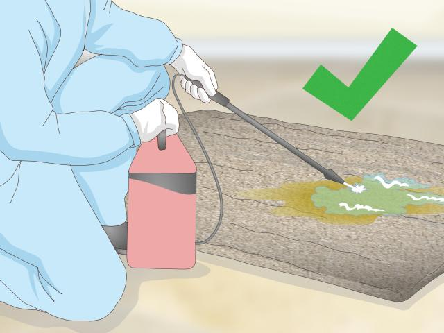 8 Ways to Remove Old Dog Urine Stains - wikiHow