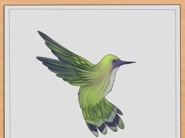 Draw Hummingbirds 7 Steps With - Wikihow