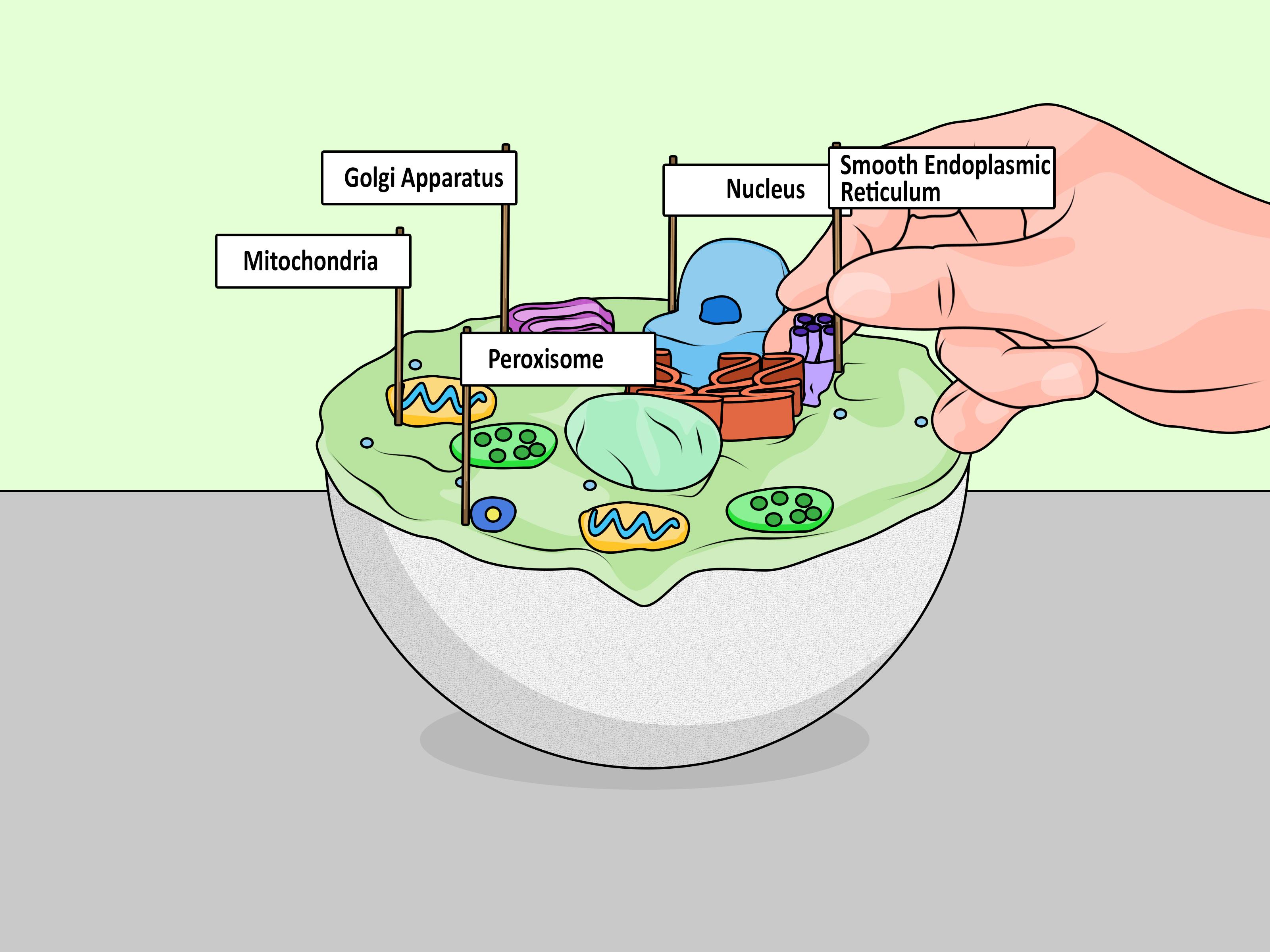 how to make a cell diagram danfoss mid position valve wiring 4 ways model wikihow