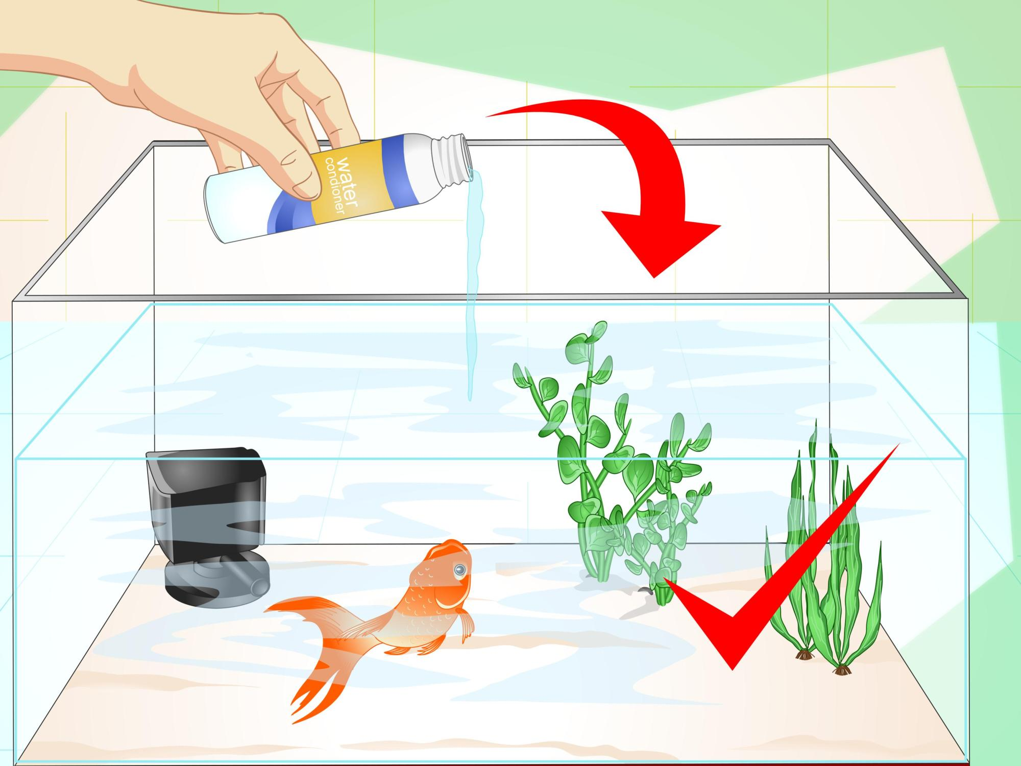 hight resolution of how to revive a goldfish
