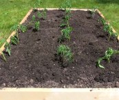 how to prepare raised garden bed