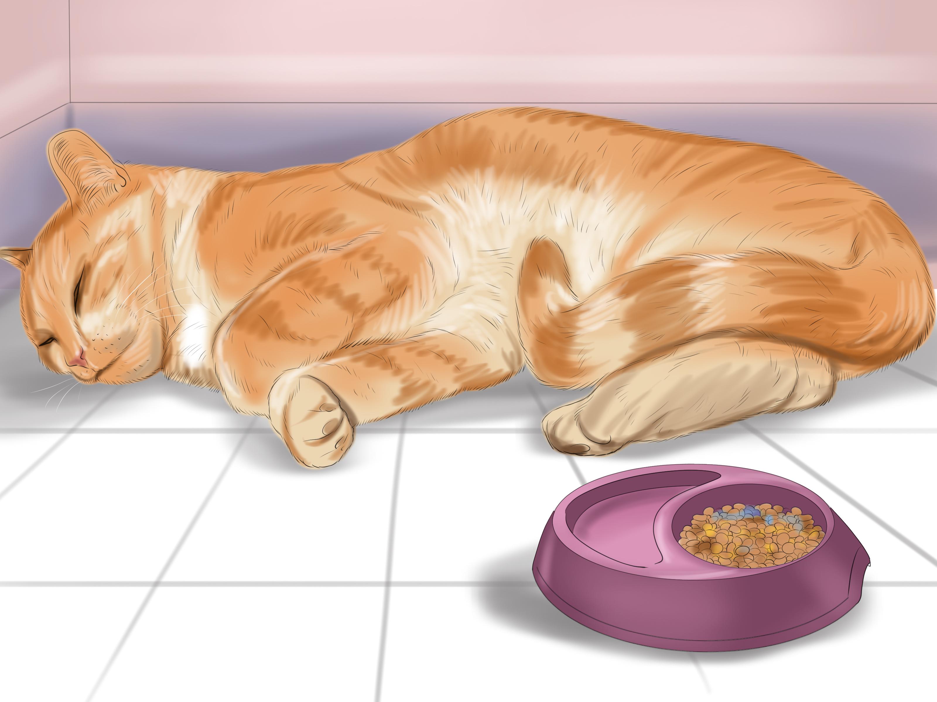 3 Formas de Saber se Seu Gato Est Doente  wikiHow