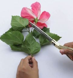 how to dissect a flower [ 1920 x 1080 Pixel ]