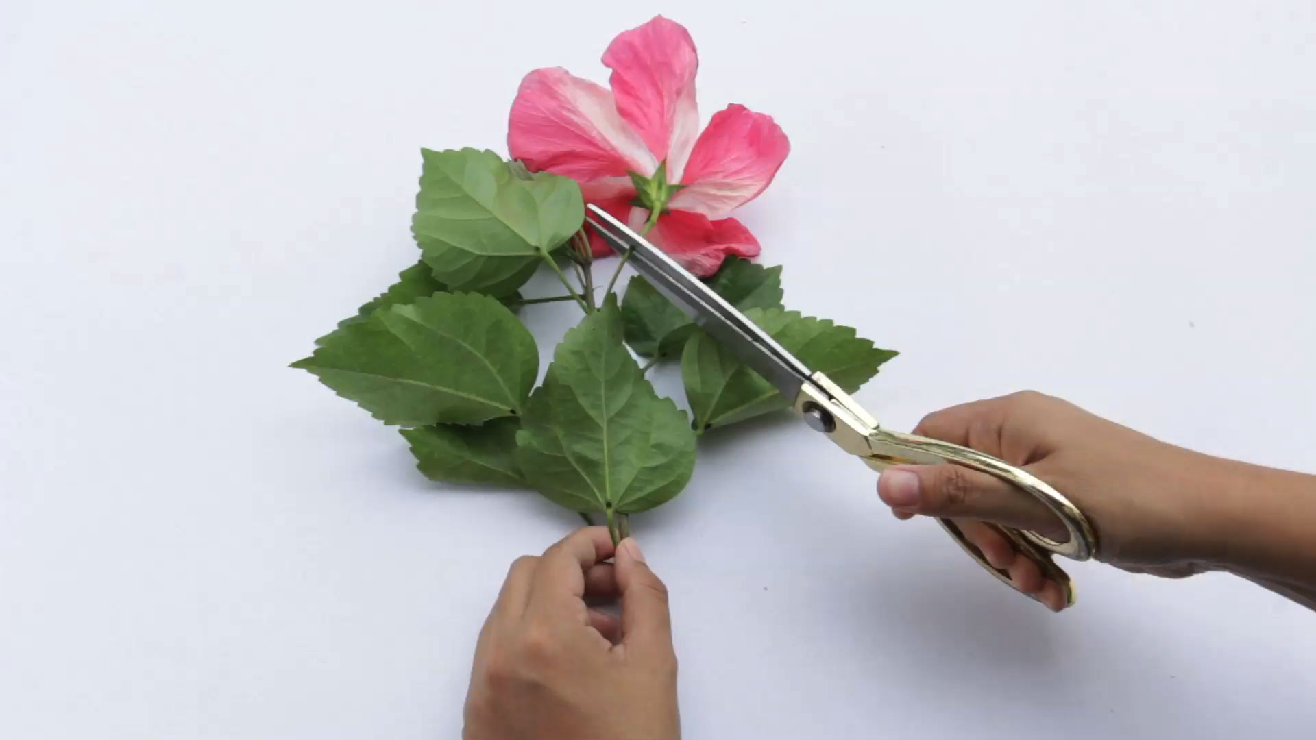 hight resolution of how to dissect a flower