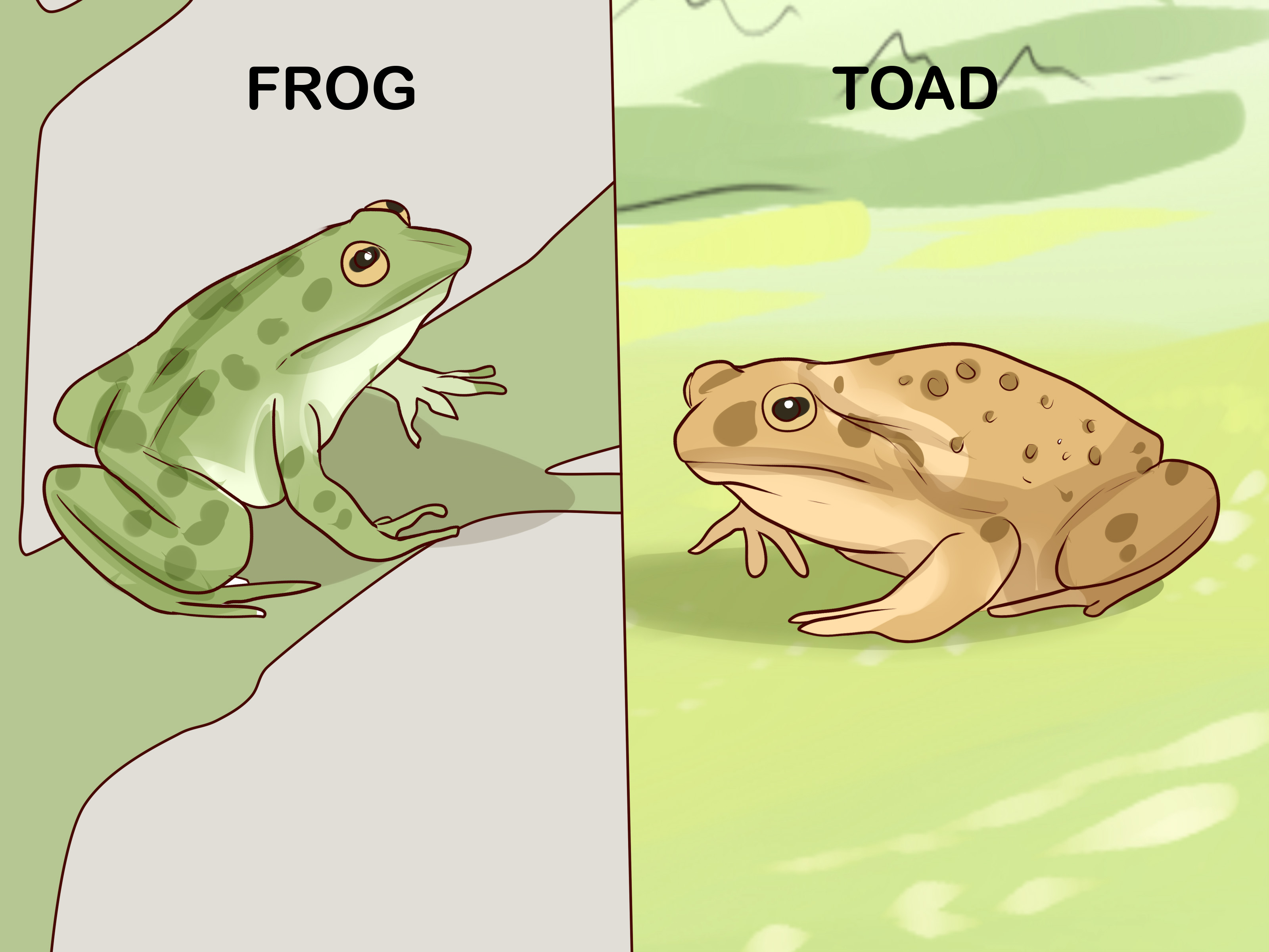 How To Find Toads With Pictures