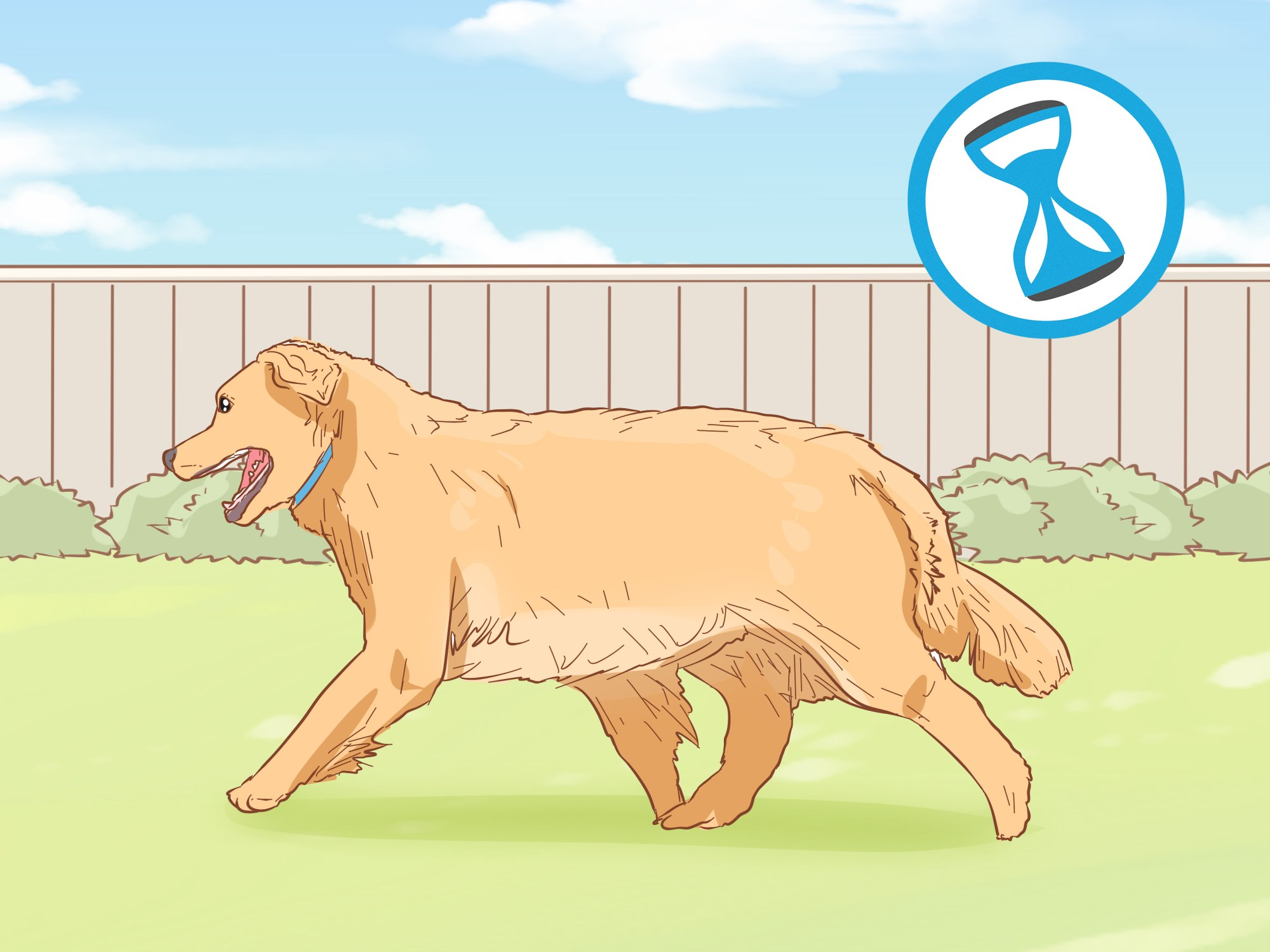 hight resolution of how to treat skin allergies in golden retrievers