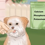 3 Ways To Feed Your Shih Tzu Wikihow