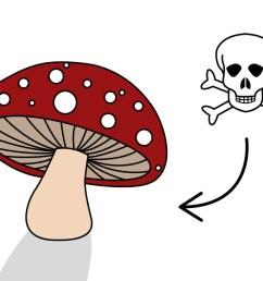 how to pick mushrooms [ 1280 x 720 Pixel ]