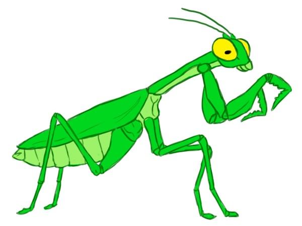 draw praying mantis 12