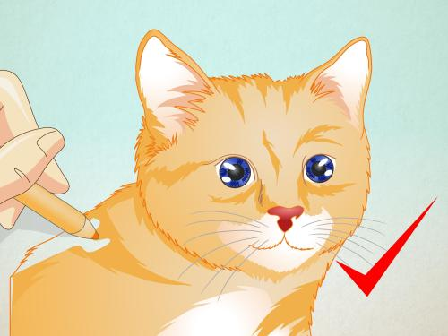 small resolution of how to draw a cat face