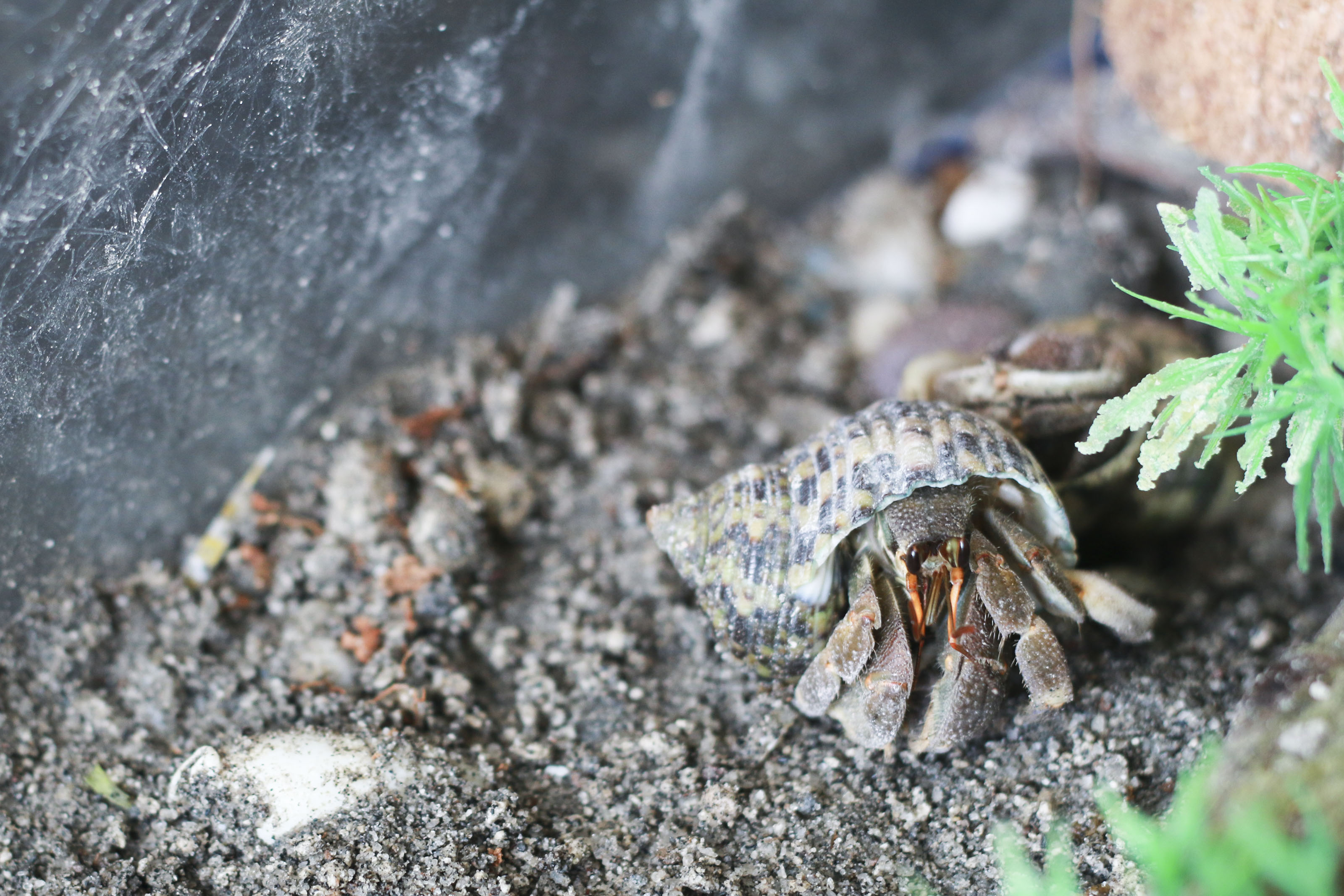 How To Maintain Humidity In A Pet Hermit Crab Habitat 7 Steps