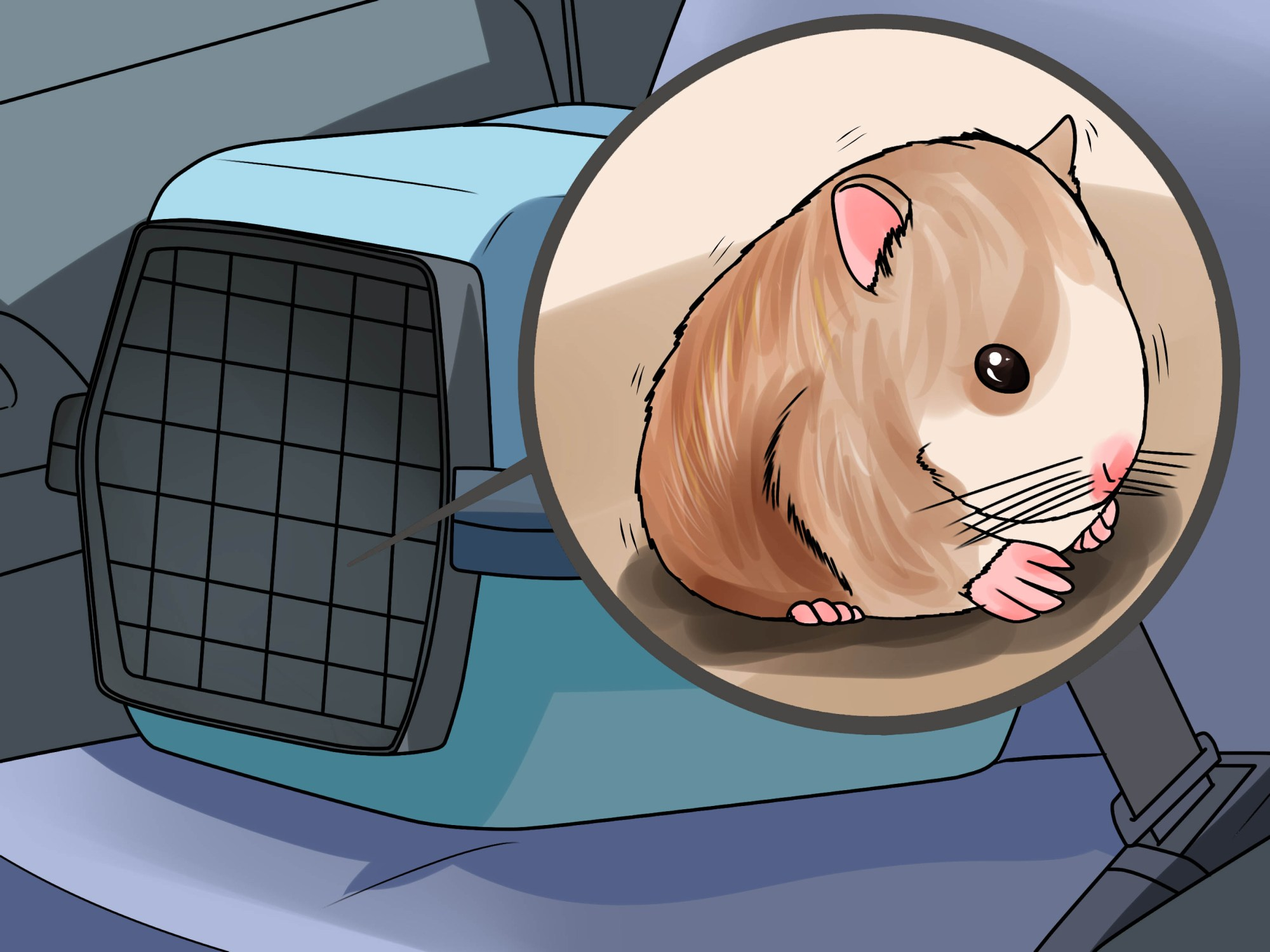 hight resolution of guinea pig ear diagram