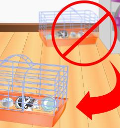 how to clean a guinea pig cage [ 3200 x 2400 Pixel ]