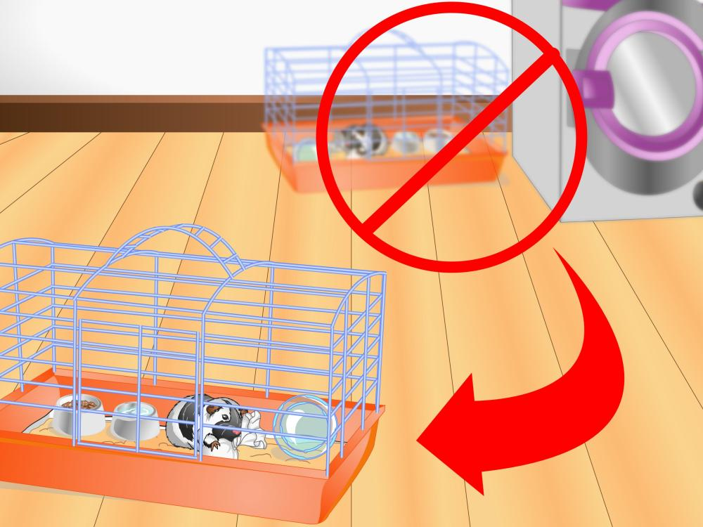 medium resolution of how to clean a guinea pig cage