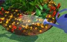 Start Flower Garden With - Wikihow