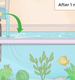 how to set up an aquarium with live plants [ 3200 x 2400 Pixel ]
