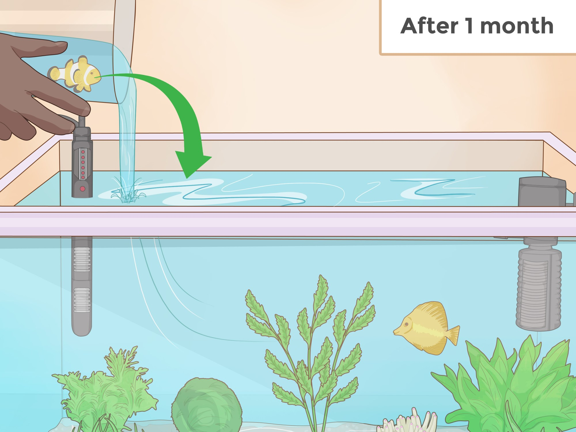 hight resolution of how to set up an aquarium with live plants
