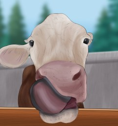 how to take blood samples from cattle [ 3200 x 2400 Pixel ]