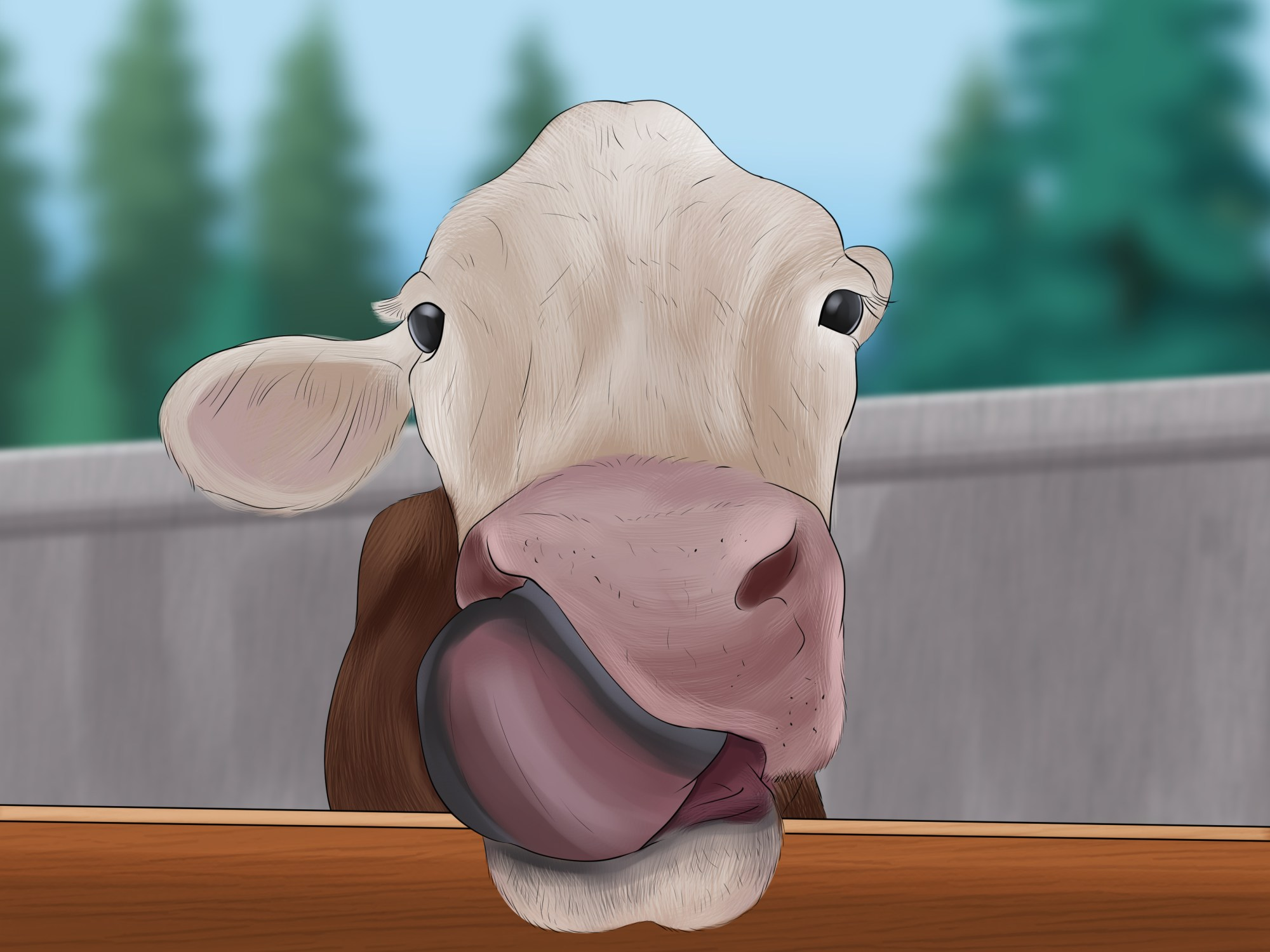hight resolution of how to take blood samples from cattle