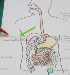 how to draw a model of the digestive system [ 3200 x 2400 Pixel ]