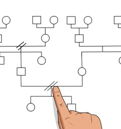 how to make a genogram [ 3200 x 2400 Pixel ]